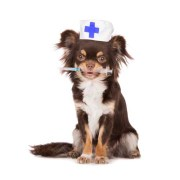 Vaccinating all dogs - yay or nay