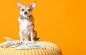 48 Ways to Save Money on Dog Grooming, Training and Supplies