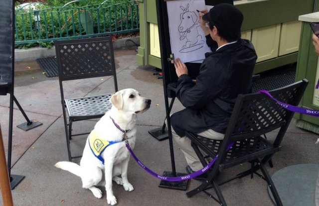 A Service Dog Gets His Caricature Drawn At Disneyland