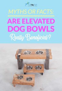 Benefits of Elevated Food Bowls for Dogs