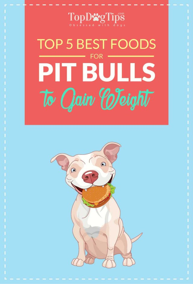 Best Dog Foods for Pitbulls to Gain Weight Quickly