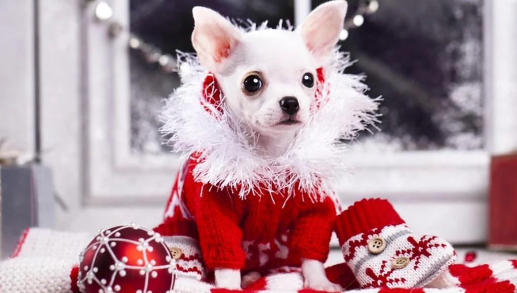Dog Christmas Clothes