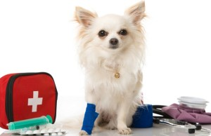 Pro Pet Hero Online Dog First Aid Course