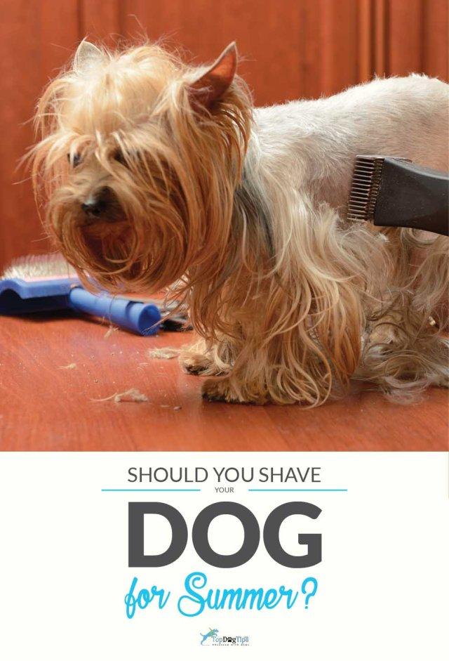 Shaving Your Dog For Summer