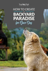 Tips on How to Create A Backyard Paradise For Your Dog