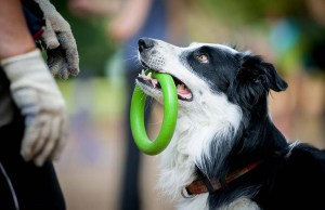 25 Smart Dog Breeds That Are Easiest To Train