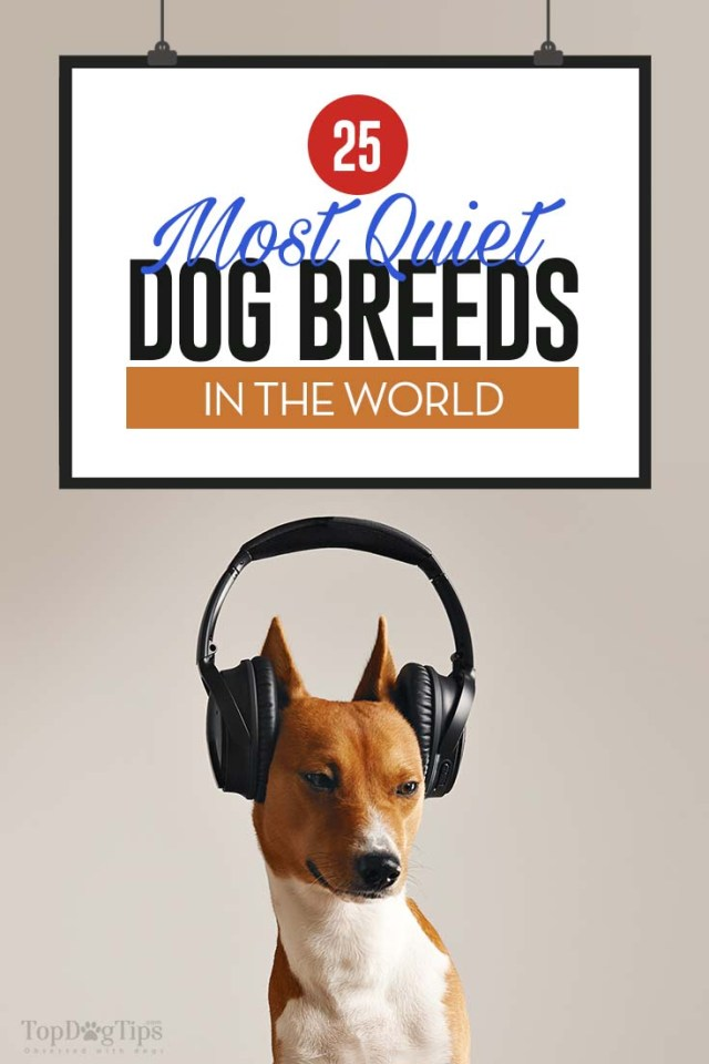 30 Most Quiet Dog Breeds Perfect for Apartments or Condos