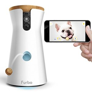 interact with your dog while at work