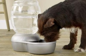 5 Best Auto Fill Dog Water Bowl Brands of 2020