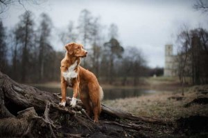 Amazing dog photo in the nature