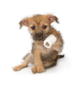 Bring dog first aid kit for emergencies