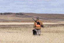 Check the weather before hunting with a dog