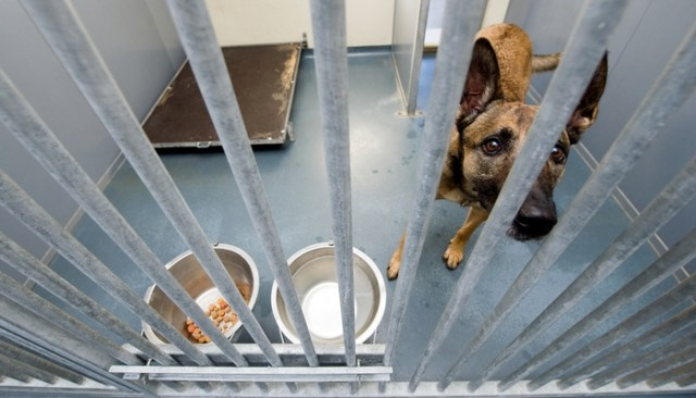 Death Row Shelter Dog Rescues Her Rescuers
