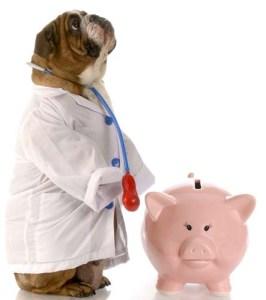Decrease vet bills with proper dog feeding