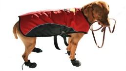 Remember to bring a dog cooling vest
