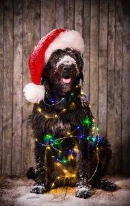 Dog is dressed like santa claus