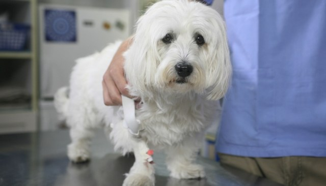 FDA Says Skin Cancer Cream Has Caused Deaths in Dogs