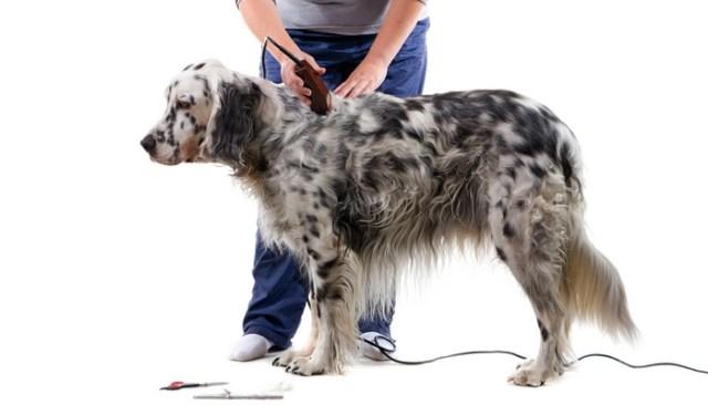 How To Groom A Dog