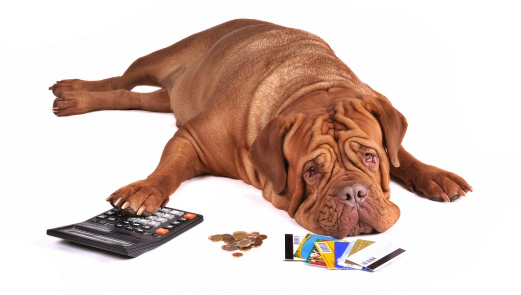 How to Save and Budget for General Dog Costs