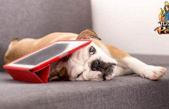 How Pet Technology for Understanding Dogs