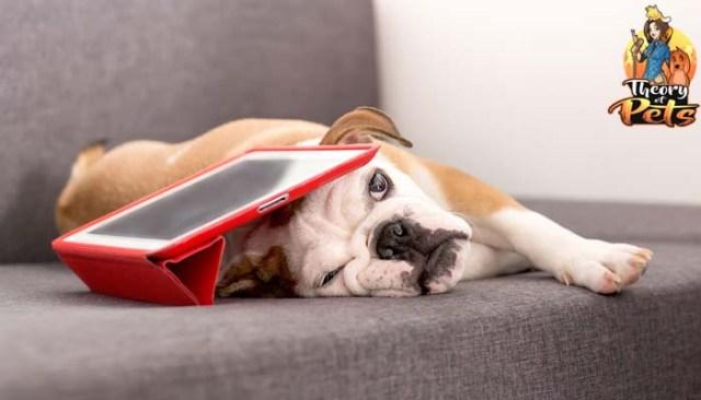 Pet Technology for Understanding Dogs