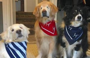 Smiley the Therapy Dog