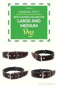 Top Best Leather Dog Collars for Big Dogs