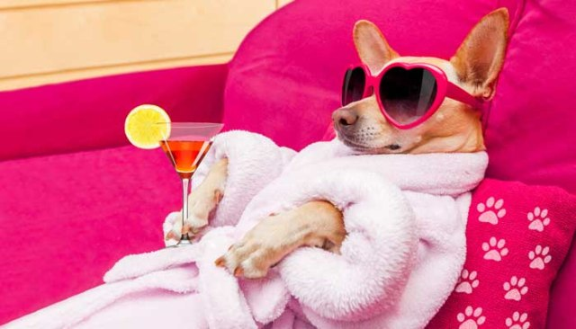Top Best Pinterest Boards for Dogs and Owners