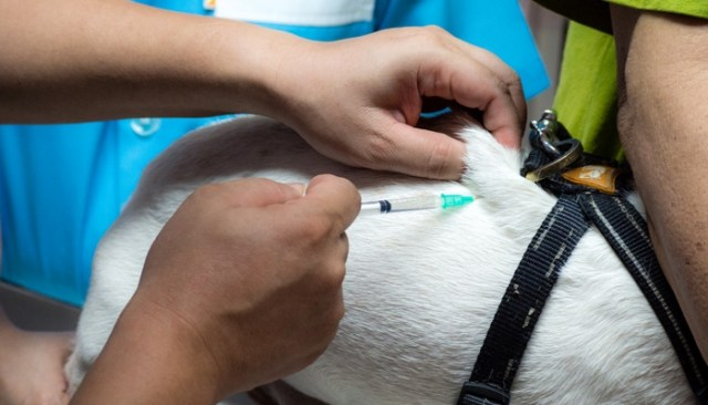 how to give a dog an injection