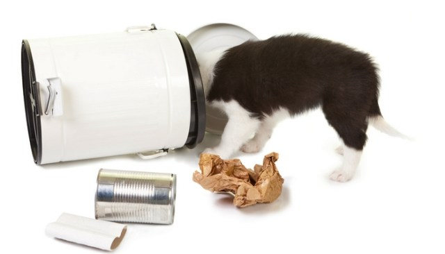 Pet proof your home to avoid this type of issues
