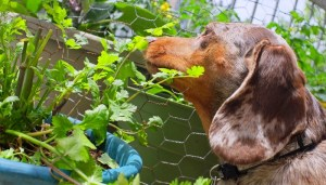 Make sure your garden and lawn are dog friendly and safe