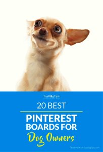 Best Pinterest Boards For Dog Owners