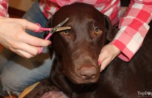 Guide on How to Trim Your Dog's Face Hair with Scissors