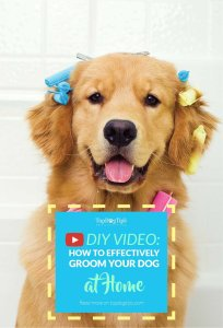 How To Groom A Dog at Home by Yourself