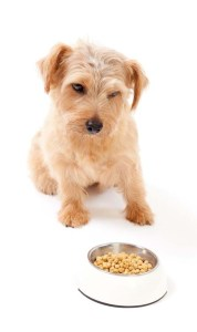 How to choose the best cheap puppy food brand