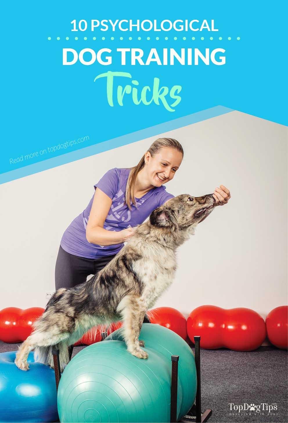 Psychological Dog Training Tricks