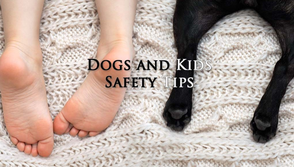 Safety Adopting Dog for Family with Kids
