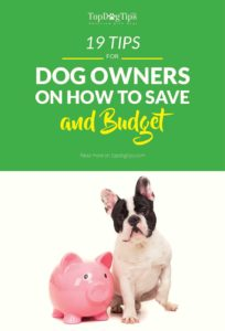 Tips on How to Save and Budget for Your Dog's General Expenses