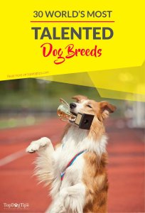 Top Most Talented Dogs