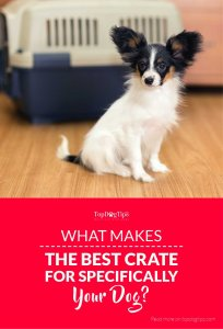 What Makes the Best Pet Crate for Your Specific Dog