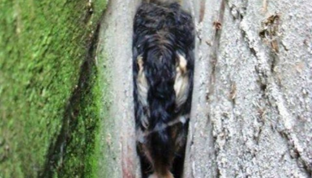 Destitute Dog Trapped In Wall Receives Happily-Ever-After Ending