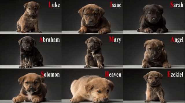 Watch as Brave Rescuers Save 9 Puppies from Tiny Cave!