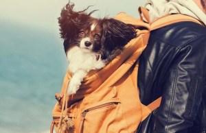 Best Dog Carrier Backpack Brands