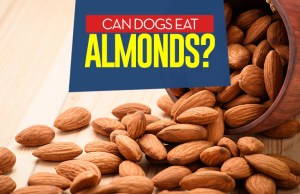 Can I give my dog almonds