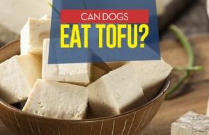 Can I give my dog tofu