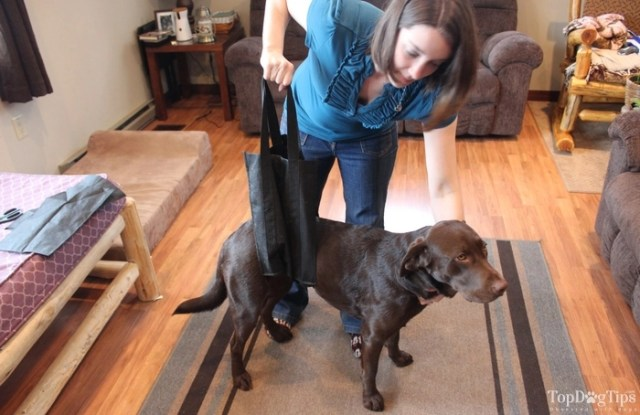 How To Make and Use A Rear Leg Sling for Dogs