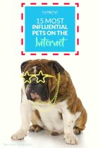 Most Influential Pets On the Internet