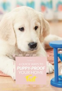 Quick Tips for Puppy-Proofing Your Home