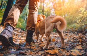 Step by Step Checklist for Hiking with Your Dog
