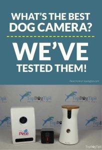 The Best Dog Camera Test